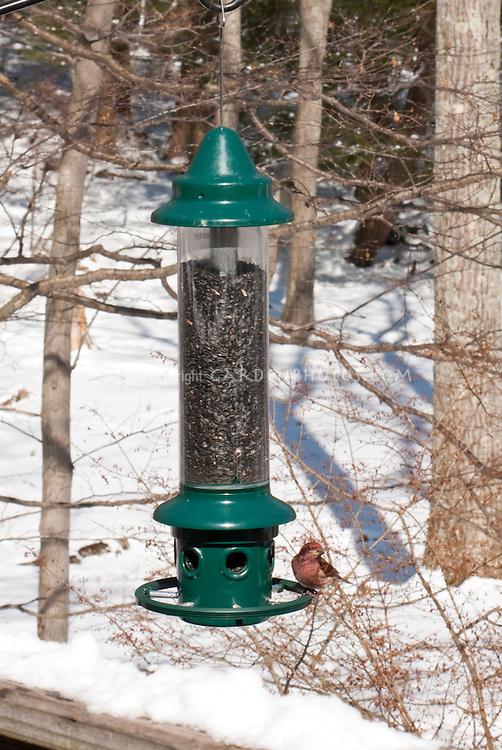 Birdfeeder and purple finch in snow