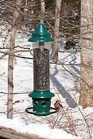 Birdfeeder and purple finch in snow