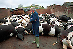 Farmer  Chris  Baldwin  near Chulmleigh, Devon has been culled under the contiguous cull policy...His  herd of British  Freisans  were culled  against  his  will last  Tuesday and he managed to  stop the  MAFF slaughter  teams  half  way through leaving  18 oif  his  herd alive.   In a hight  court pull out MAFF left  him with half  his herd  alive and the  other culled  half as  decomposing animals in a  cattle  crush.