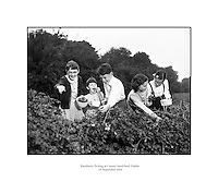 Blackberry Picking at Sandyford .(For Dublin Weekly Post).19/09/1959