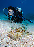 QZ0119-Dr. Spotted Wobbegong Shark (Orectolobus maculatus), and scuba diver (model released). Australia, Pacific Ocean.<br /> Photo Copyright &copy; Brandon Cole. All rights reserved worldwide.  www.brandoncole.com