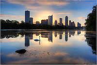 In the shadow of the Austin skyline on a perfect September Morning, I was honored when a beautiful swan came my way as I was taking photos from Lou Neff Point.