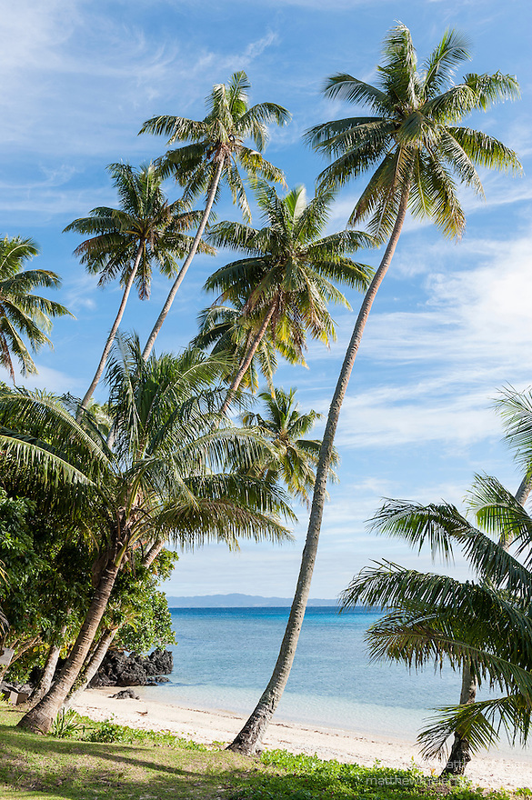 Taveuni, Fiji; palm trees line a beach overlooking Somosomo Strait in early morning sunlight