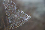 Idaho, South central, Shoshone.  A delicate spider web covered with dew.