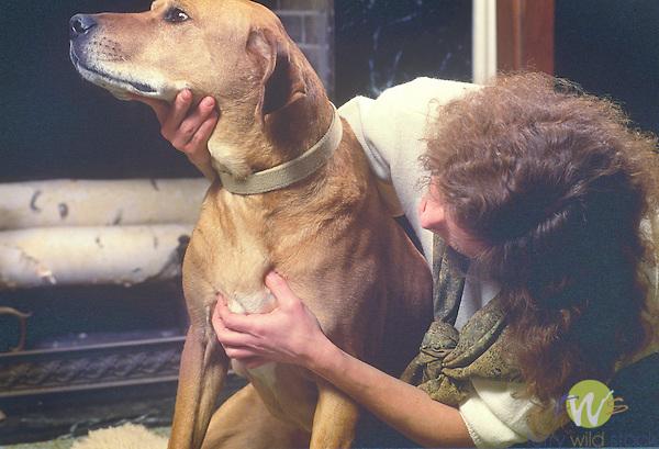 Karen Bush treating dog