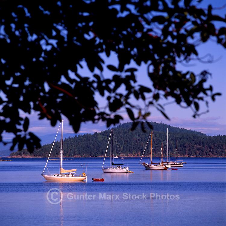 Saturna Island, Southern Gulf Islands, BC, British Columbia, Canada - Sailboats anchored at Winter Cove Provincial Marine Park