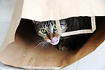 Cat playing with brown bag