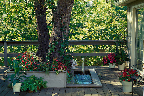 Tree and pool in wooden deck