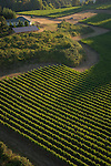 Aerial view over Crawford-Beck Vineyard, Eola-Amity AVA, Willamette Valley, Oregon