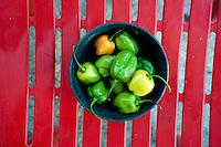 Habanero chiles, Yucatan, Mexico