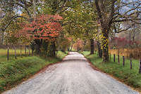 Sparks Lane in Cades Cove lined with fall foliage in the early morning.