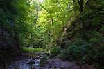 Stream in Parfrey's Glen Wisconsin State Natural Area