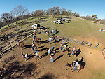 Driving the herd into the corral for calf marking and branding with Busi family at the hilltop corral, Amador County, Calif. Photographed from above using a sUAV/quadcopter.