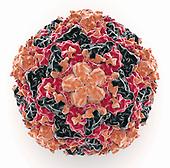 Biomedical illustration of a Rhinovirus
