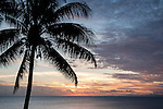 Taveuni, Fiji; a palm tree silhouette against a colorful sunset sky
