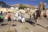 Eritrea. Anseba province. Keren. A camel-driver and his camel, carrying wood on its back, meets a group of young muslim teenagers, wearing hip-hop clothes. © 2006 Didier Ruef