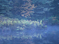 Fall foilage and misty pond in East Hampton, NY