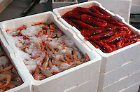 Pescatori al mercato del pesce. Fishermen to fish market....