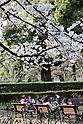 Cherry blossoms 2017