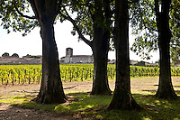 Vineyard at St Emilion in the Bordeaux wine region of France
