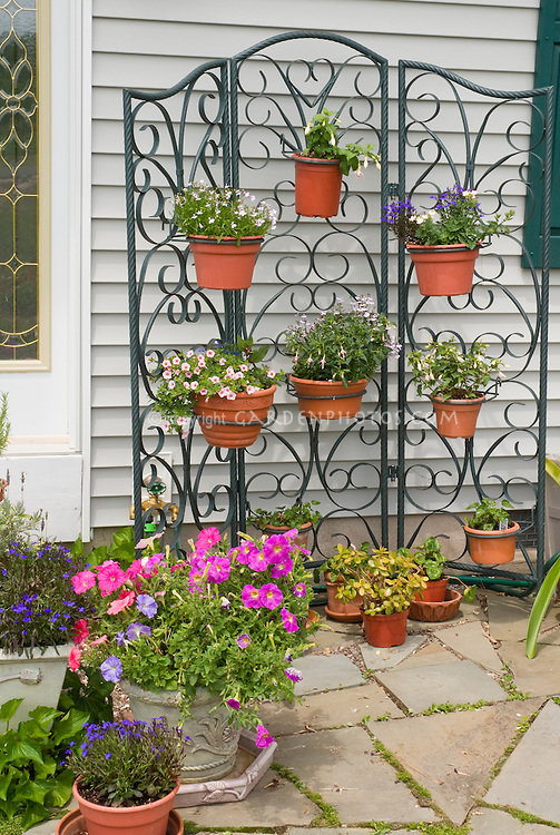 Container Garden Plant Amp Flower Stock Photography