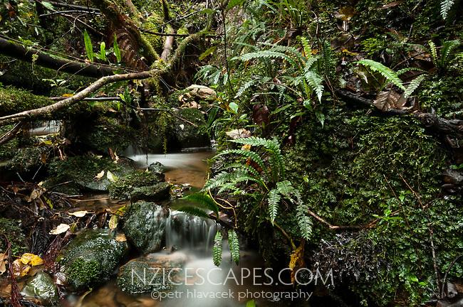 Forest stream near Fox River, Paparoa NP, Buller Region, West Coast, New Zealand, NZ