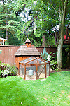 Backyard, urban chicken coop