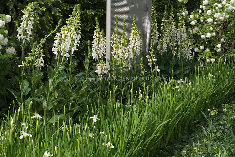 White garden: iris, digitalis foxglove, hydrangea, in spring