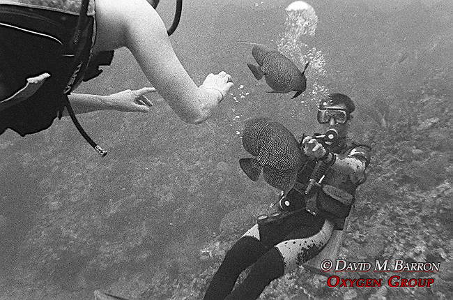 Divers with Angel Fish