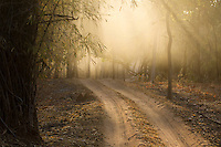 Morning fog lifting along a dirt road, Bandhavgarh National Park, India
