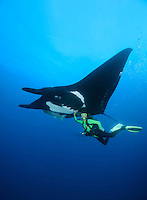 QT2098-D. Manta Ray (Manta birostris) interacts with scuba diver (model released). Some rays are very friendly toward divers, and enjoy gentle stroking on the belly as well as &quot;bubble baths&quot; from the regulator's exhaust. Baja, Mexico, Pacific Ocean.<br /> Photo Copyright &copy; Brandon Cole. All rights reserved worldwide.  www.brandoncole.com
