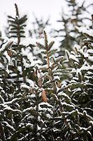 Snow in Maryland near Washington DC