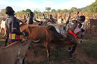 In the village of Bori, in the land of the Banas, during the initiation of the young Aïke the mazas catch the calves and bulls. The animals are brought from the bush by young tchocoré in an indescribable brouhaha, to the sound of trumpets and horns, the women and men surrounding them while dancing to wild rhythms./// Village de Bori, pays Bana pendant l'initiation du jeune Aïké, les mazas attrapent les vaches et les taureaux. Les bêtes ont été amenées de la brousse par les jeunes tchocorés et dans un brouhaha indescriptible, aux sons des trompettes et des cornes, les femmes et les hommes les entourent en dansant sur des rythmes sauvages.