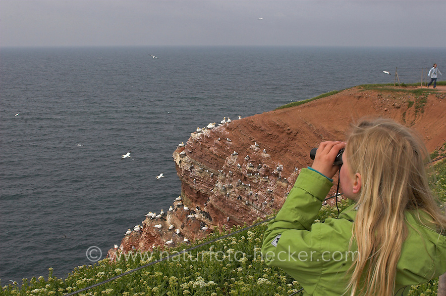 Mädchen, Kind beobachtet Vögel mit dem Fernglas am Vogelfelsen Helgoland, Vogelkolonie, Vogelbeobachtung, Baßtölpel, Trottellummen, Dreizehenmöwen