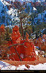 Dead Limber Pine Tree in Winter, Queen's Garden Trail, Bryce Canyon National Park, Utah