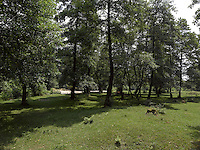 FOREST_LOCATION_90079
