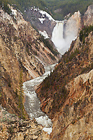Lower Falls of the Yellowstone from Artists Point in early summer