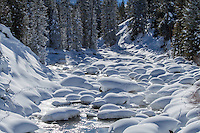 Coyote tracks aslong Soda Butte Creek during winter