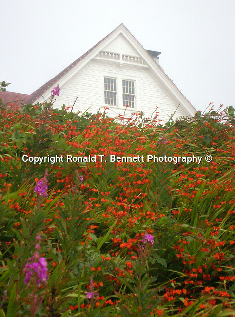 Flowers heaceta head lighthouse and keepers quarters for Oregon craft floral