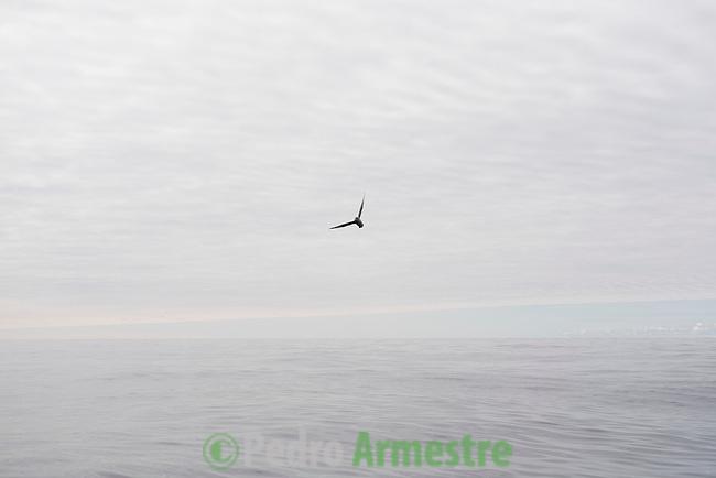 13/06/2016<br /> <br /> Traves&iacute;a hacia Svalbard a bordo del Arctic Sunrise. Crew. Tripulaci&oacute;n. &copy; Pedro Armestre/ Greenpeace Handout - No ventas -No Archivos - Uso editorial solamente - Uso libre solamente para 14 d&iacute;as despu&eacute;s de liberaci&oacute;n. Foto proporcionada por GREENPEACE, uso solamente para ilustrar noticias o comentarios sobre los hechos o eventos representados en esta imagen.<br /> &copy; Pedro Armestre/ Greenpeace Handout - No sales - No Archives - Editorial Use Only - Free use only for 14 days after release. Photo provided by GREENPEACE, distributed handout photo to be used only to illustrate news reporting or commentary on the facts or events depicted in this image.