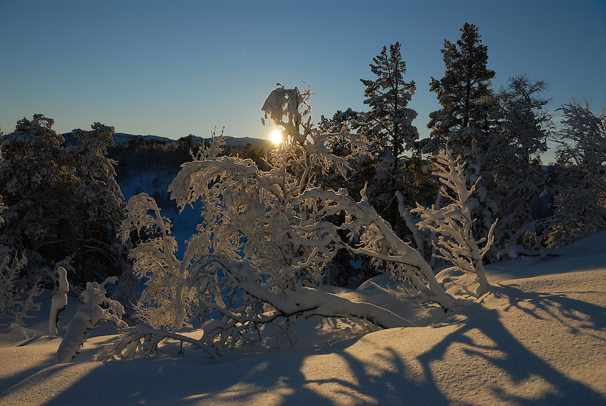 Sunny winter,Norway, Landscape, landskap,