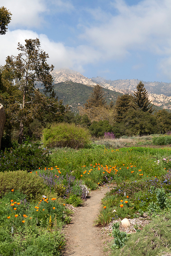 Santa Barbara Botanic Garden Katina Houvouras