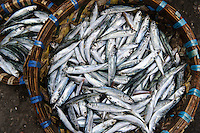 Baskets of small fish (sardines) at a market, Makassar, Sulawesi, Indonesia.