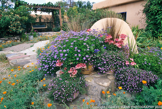 Susan Blevins of Taos, New Mexico, created an elaborate home garden featuring containers, perennial beds, a Japanese themed path and a regional style that reflectes the Spanish and pueblo architecture of the area. BLue Marguerite daisies embellish an traditional horno oven from the Spanish culture in the front patio which is glecked with orange California popies.
