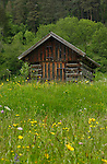 Cattle shed in  a meadow, Imst district, Tyrol/Tirol, Austria, Alps.