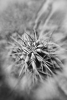 Cacti - Lensbaby - Joshua Tree National Park - Infrared Black & White