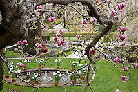 Filoli, formal estate garden seen through spring flowering tree, Magnolia soulangeana- Saucer Magnolia