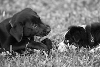 Puppies Samson & Cooper on a play date