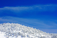 24 February 2008: Snow covered trees and blue skies after Late winter storm in Lake Tahoe, Truckee Nevada California border in the Sierra Nevada Mountains.