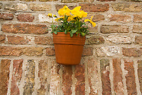Belgium, Bruges, Flowerbox on brick wall